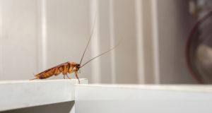 Роспотребнадзор предупредил о скорой активизации тараканов