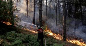 Власти Турции взяли под контроль 137 лесных пожаров